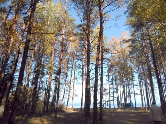 Берег озера Нарочь